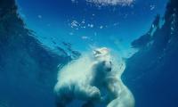 До Арктика