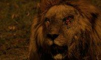 Последните лъвове