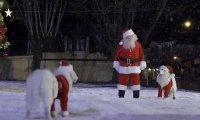 Приятелите На Дядо Коледа