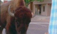 Лято в резервата на бизоните