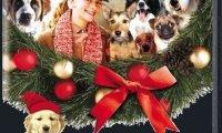12 кучета за Коледа